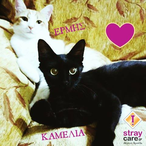 cats home stray care 3