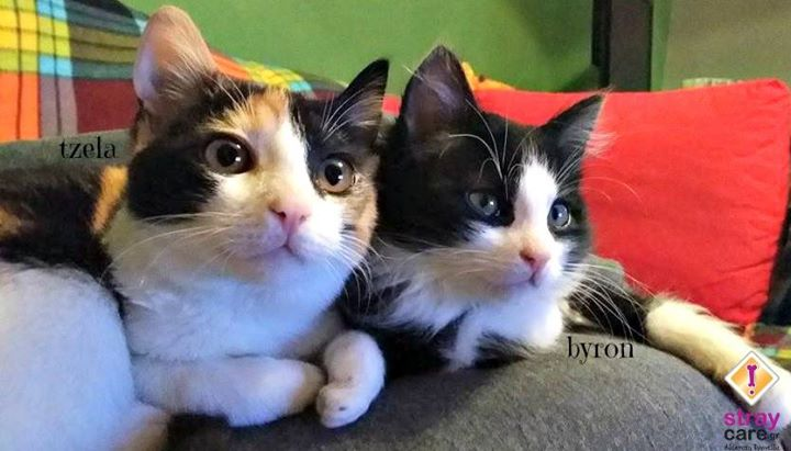 cats home stray care 5